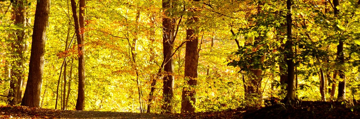 header-goldenforest